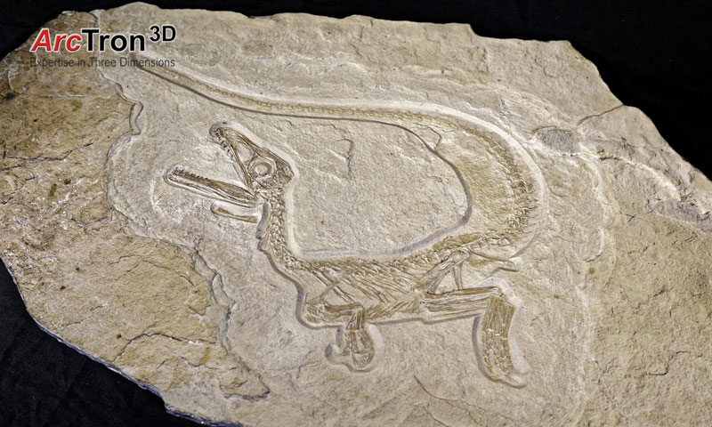 3D-Laserscanning Dinofossil gesamt