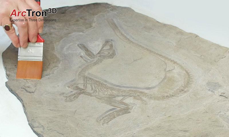 Fossilreproduktion Nachbearbeitung