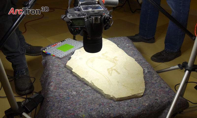 Fossilreproduktion Texturierungungsfotos