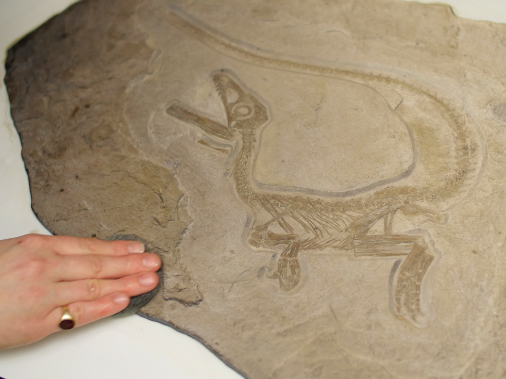 High Resolution Relief 3D Printing - dinosaur replica with manual colour and texture optimization